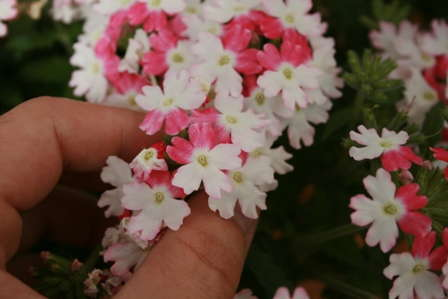 Verbena: Finished Production Tips