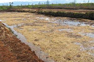 The Peat Report: Breaking Down Bog Restoration
