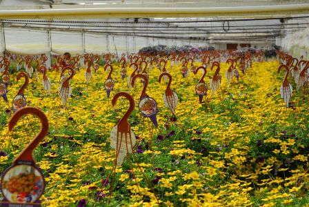 Plant Growth Regulator Strategies For Trixi