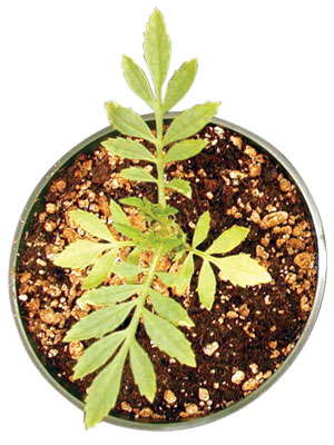 Understanding Plant Nutrition: Low Media-EC