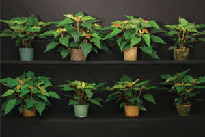Biocontainers For Long-Term Crops