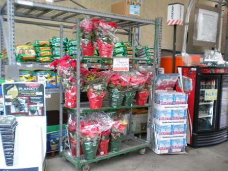 North Florida Poinsettia Retail Report