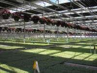 Van de Wetering Greenhouses, Inc.