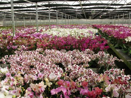 Orchid Grower Silver Vase Adds New Facility Greenhouse Grower