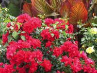 Exceptionally Floriferous