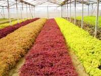 Grolink Plant Company, Inc.