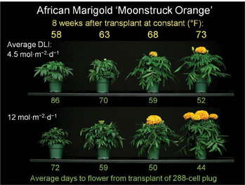 Ready Research Results: Daily Light Integral & Flowering Of Annuals