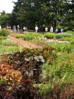 Darwin Perennials Hosts Inaugural Showcase