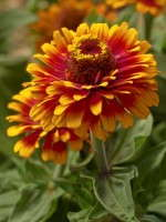 National Garden Bureau Announces 'Year Of The' Crops