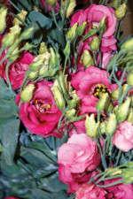 Classic Cut Flowers