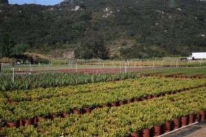 Altman Plants' production