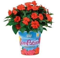 High Praise For VIVA! SunPatiens