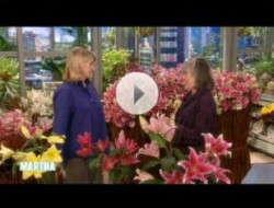 Lilies Again The Talk On 'Martha Stewart'