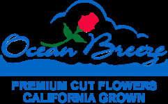 Ocean Breeze International