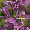 Perennials And Shrubs: New Returning Favorites