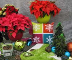 Ecke Poinsettia Open House Design Ideas