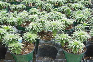 Plant Growth Regulator Guidelines