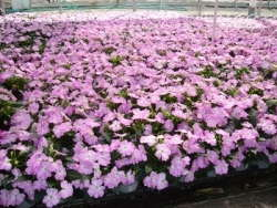 Wenke Greenhouses