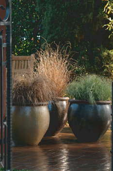 Expand Your Designer Grasses Palette