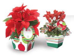 John Henry Debuts Holiday Cachepot Collection