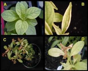 Understanding Plant Nutrition: Fertilizers And Micronutrients