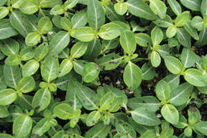 Fungicides: How Controls Impact Efficacy