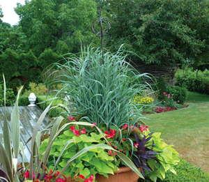 Ornamental Grasses — In Search Of No Maintenance