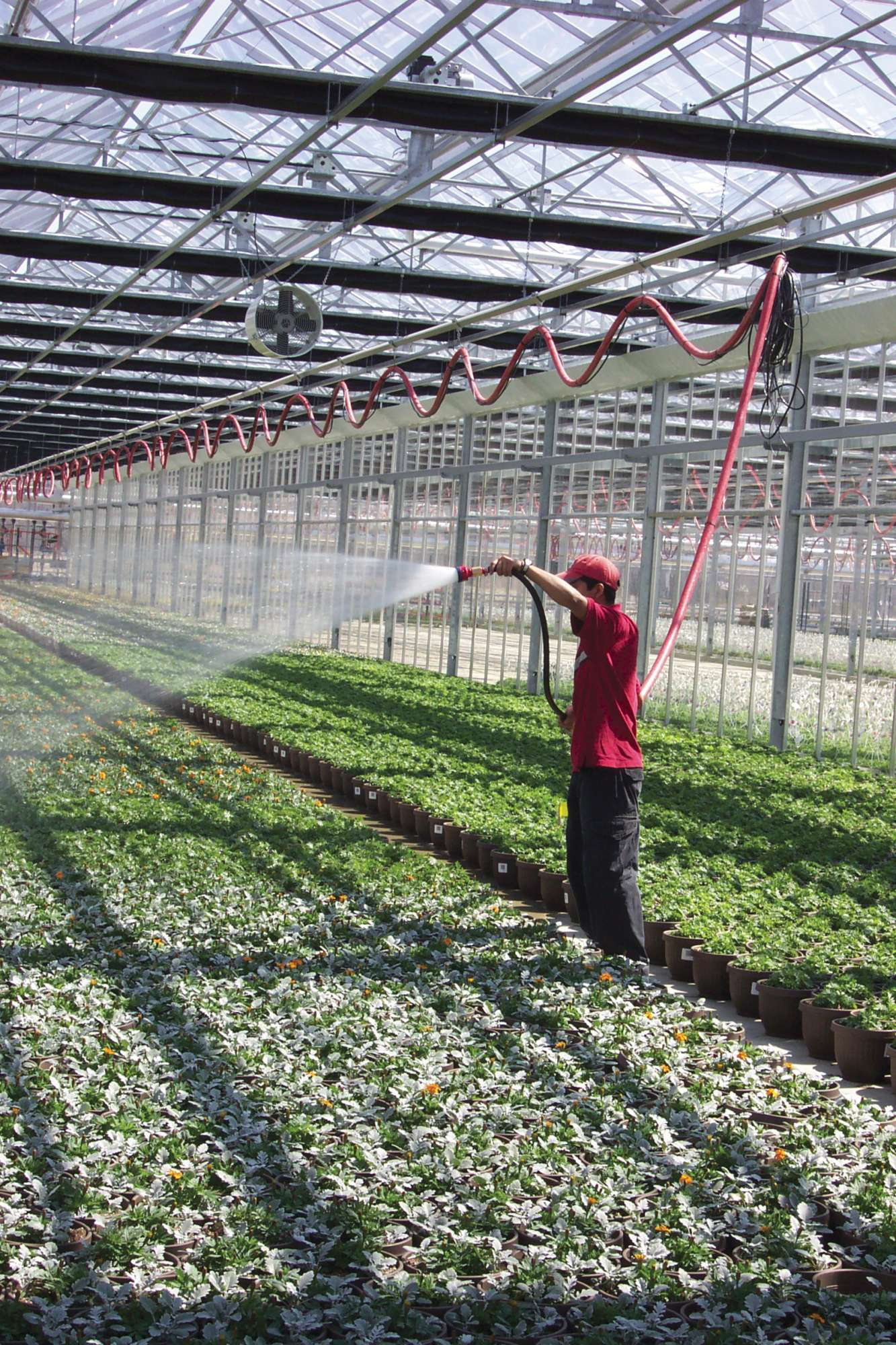 Which Watering Method Is Best Greenhouse Grower