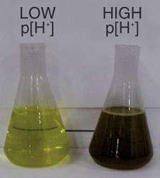 Understanding Plant Nutrition: Irrigation Water Alkalinity & pH