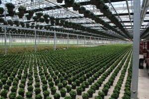 Slideshow: Green Circle Growers 2010