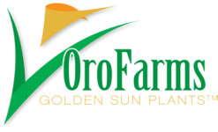 Heins On Oro Farms' Future