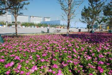 Goldsmith Varieties Bloom In Beijing