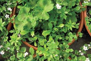 Understanding Plant Nutrition: Managing Multiple Species