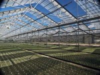 Stacy's Greenhouses, Inc.