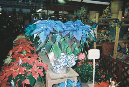 Online Only: How Did Poinsettias Fare In 2008?