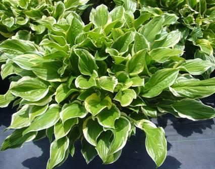 Meet Grolink S Sunhosta Greenhouse Grower