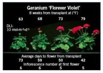 Slideshow: Energy-Efficient Annuals Geraniums And Zinnias