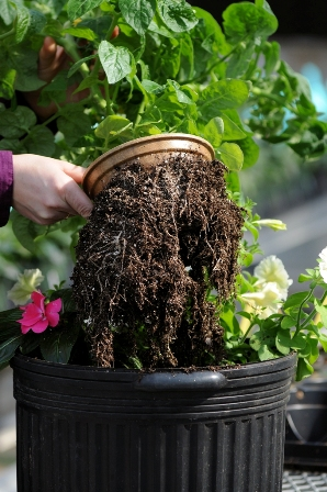Eco-Friendly Ball Pot Available In New Size