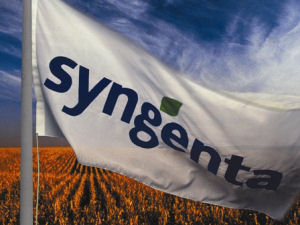Syngenta Buys Yoder's Mum And Asters Lines