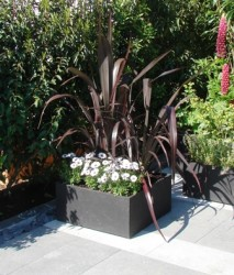 Tesselaar Introduces 2010 Plants