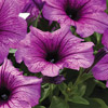 Variety Central: Hanging Baskets