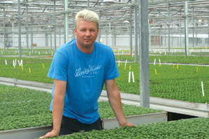 How To Grow Coreopsis Greenhouse Grower