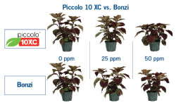 Piccolo 10 XC PGR From Fine Americas Is Concentrated Quality Control