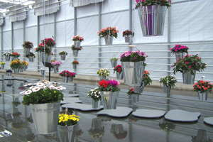 Euro Style Flower Trials