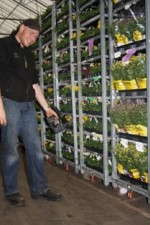 Dutch Grower Realizing Better Logistics With RFID