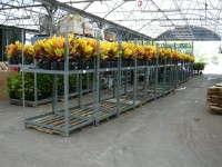 Plant Shipping Racks