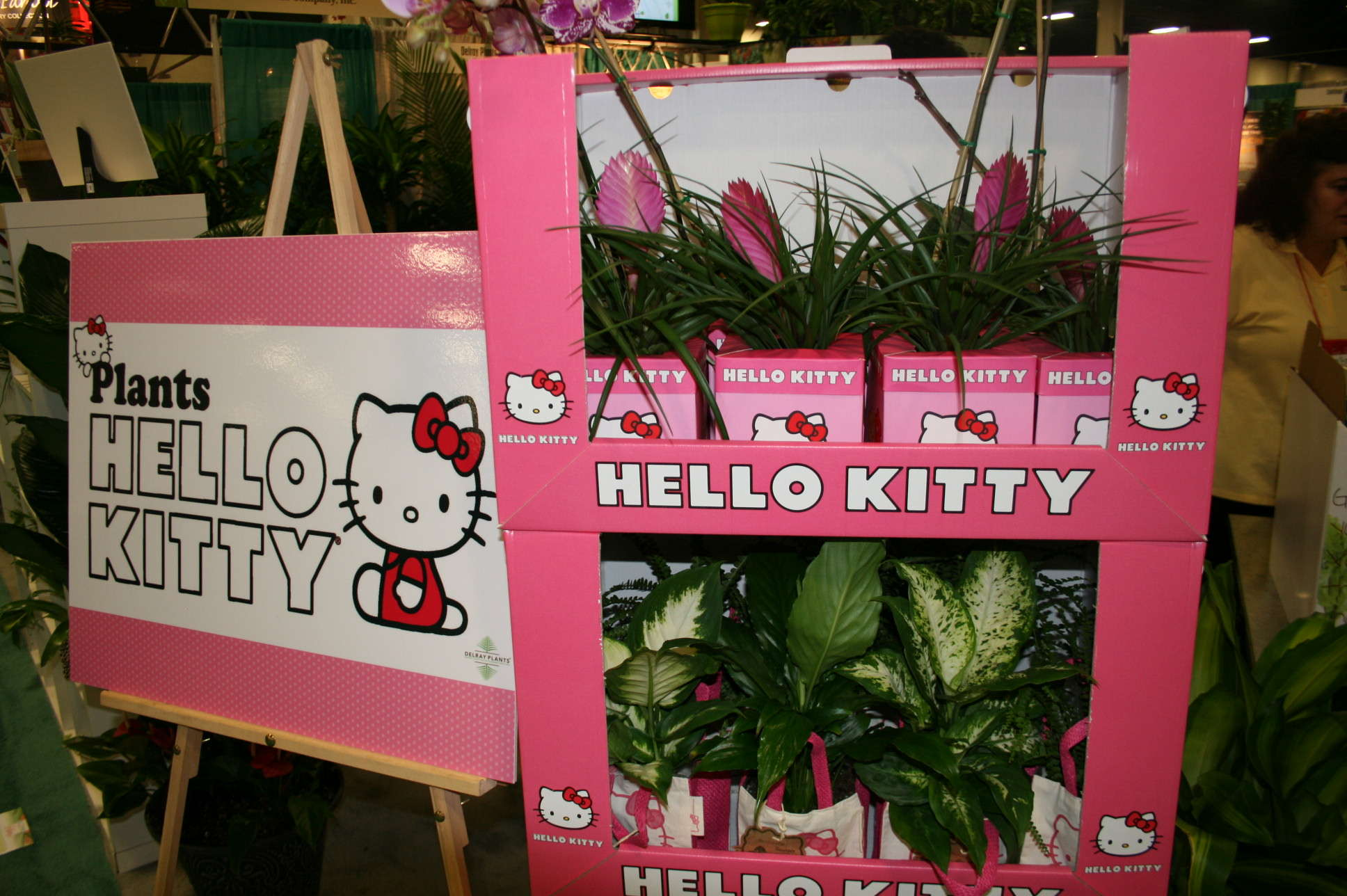 Hello Kitty Concept Hits The Right Demographic
