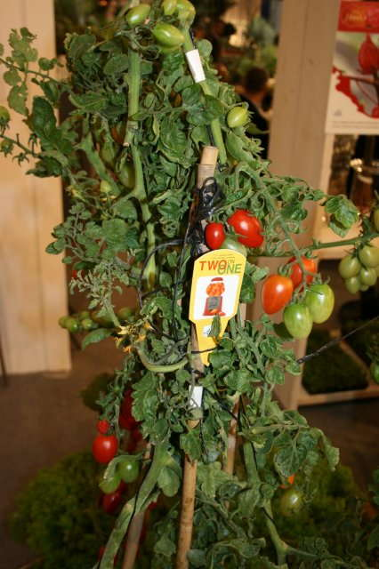Cool New Plants & Merchandising Concepts From Essen
