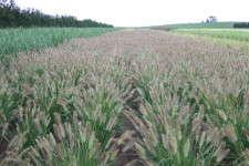 'Desert Plains' field shot