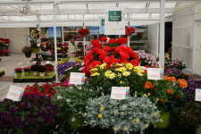 Ecke's regional displays help growers narrow choices down just to what works in their own area.
